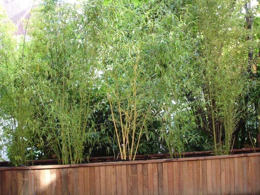 bac de bambous en bois