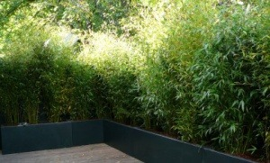 Bacs de bambous en coin de terrasse