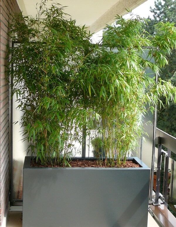 bac avec deux bambous