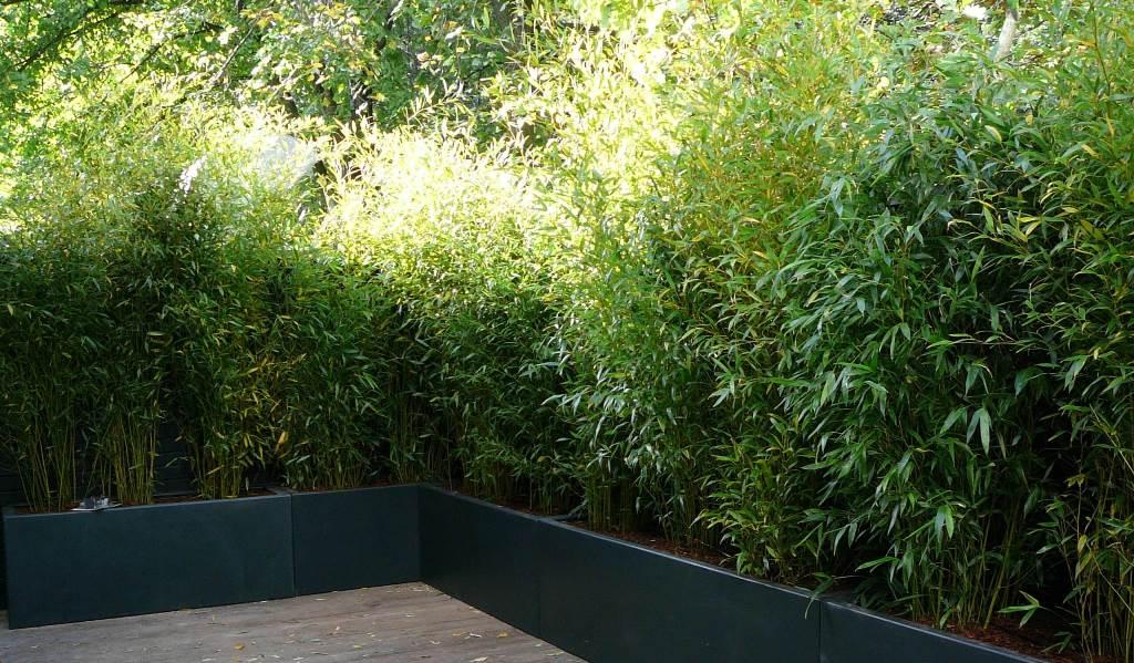 bambous en bac de coin